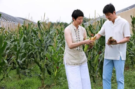 郝海东、叶钊颖夫妇在自家农场的玉米地里摘玉米 图/本刊记者 梁辰